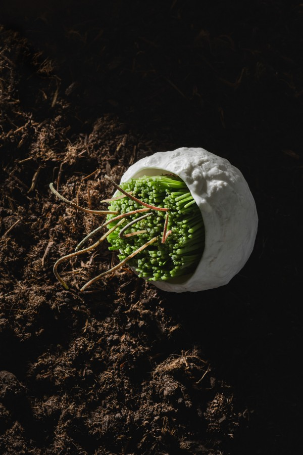 oxalis, stem, caper served on a seler bowl by Aino Nebel